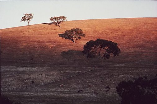 An image of Evening landscape, Gundagai, New South Wales by David Moore