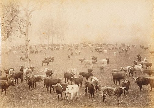 An image of Mustering on a Cattle Station, NSW by Unknown