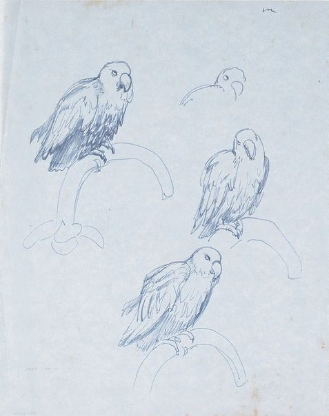 An image of Studies of a parrot, Adelaide Zoo by Nora Heysen