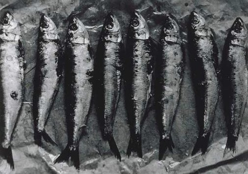 An image of Untitled (row of eight fish) by Michael Riley
