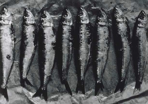 An image of Untitled (row of eight fish)