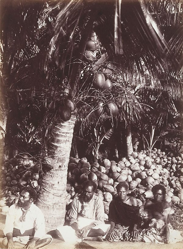 An image of Untitled (Native workers and cocoa-nuts, Fiji)