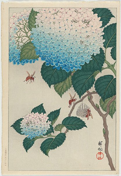 An image of (Hydrangeas and bees) by OHARA Shôson