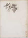 Alternate image of recto: Napoleon verso: Trees by Lloyd Rees