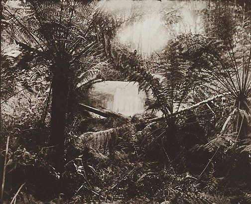 An image of Untitled (ferns and gully) by Nicholas Caire