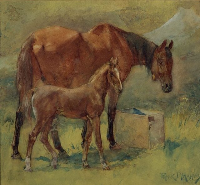 An image of Mare and foal