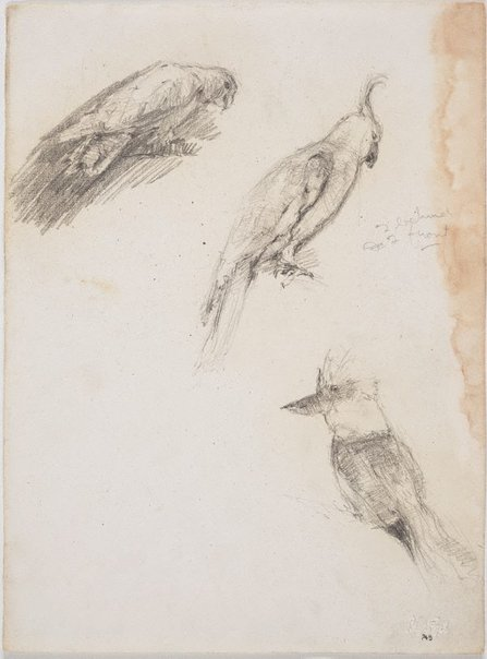An image of Galah, cockatoo and kookaburra by Lloyd Rees