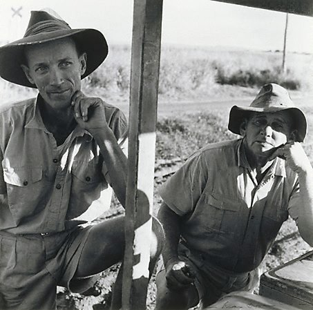 An image of Cane train drivers, Queensland by Max Dupain
