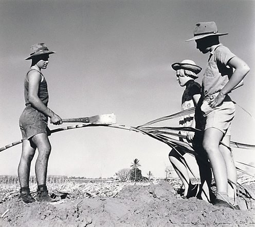 An image of Children of the Pearce family, Burdekin District, Queensland