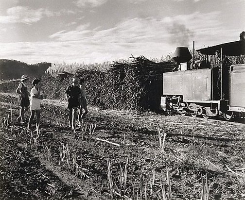 An image of Cane train, Burdekin District, Queensland by Max Dupain