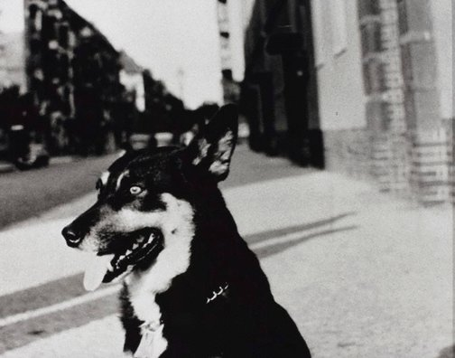 An image of Dog in the street by Christian Boltanski