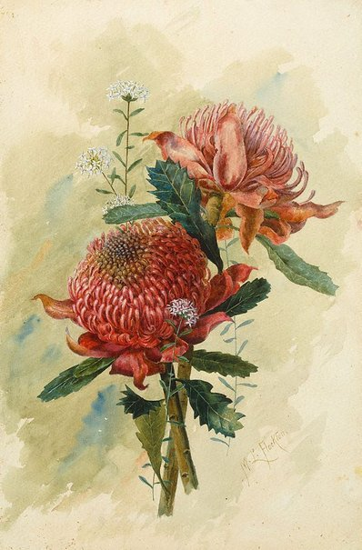 An image of Waratahs by Margaret Lilian Flockton
