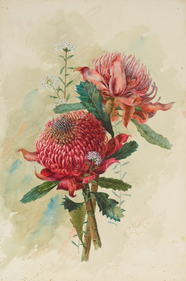 An image of Waratahs