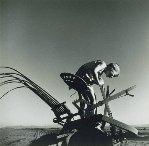 An image of Boy on tractor, Queensland by Max Dupain
