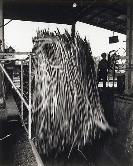 An image of Unloading cane, Queensland by Max Dupain