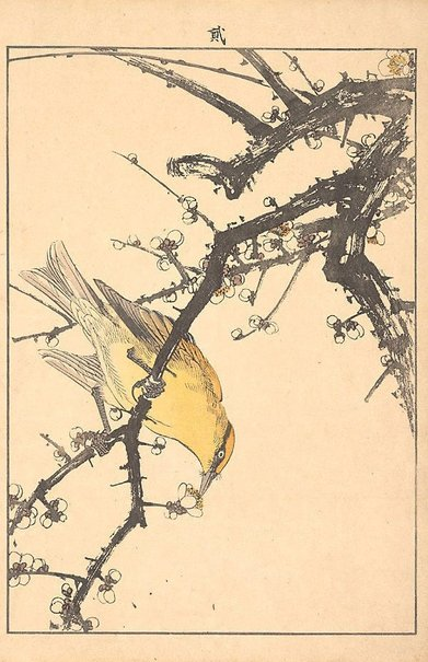 An image of White plum blossoms and bird by IMAO Keinen