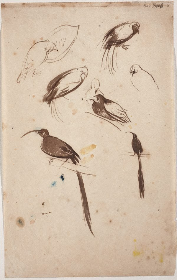 An image of Sheet of studies of birds