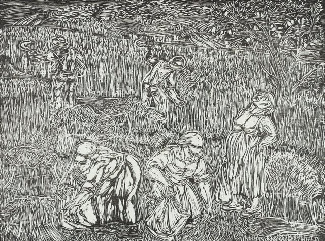 An image of Harvesting the wheat