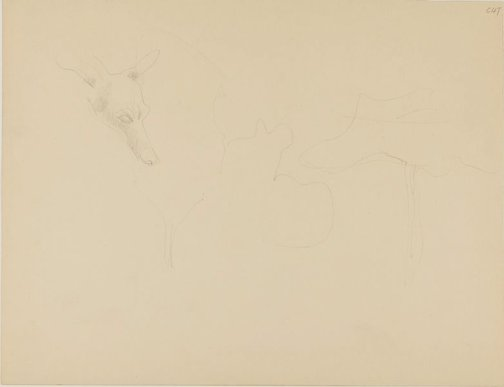 An image of (Dog's head study) (Early Sydney period) by William Dobell