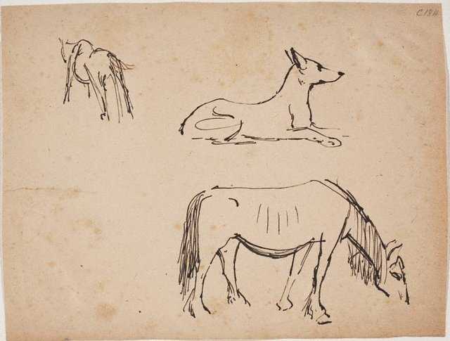 An image of (Horse and dog studies) (Early Sydney period)