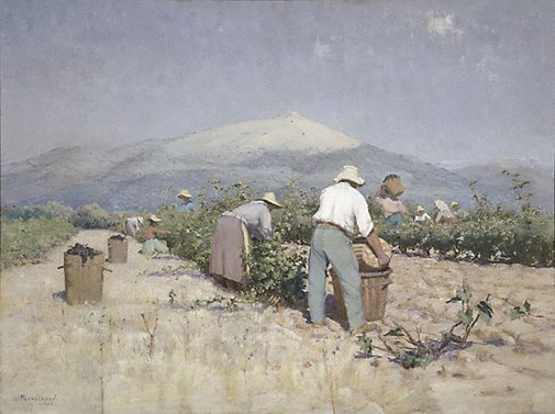 An image of Vintage harvest in Provence by Frédéric Montenard