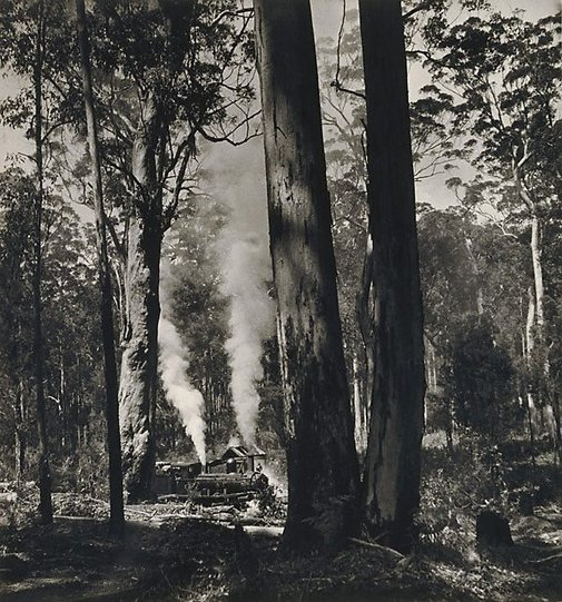 An image of Karri Country, WA by Max Dupain