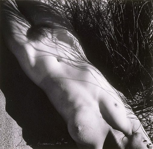 An image of Nude in grass by Max Dupain