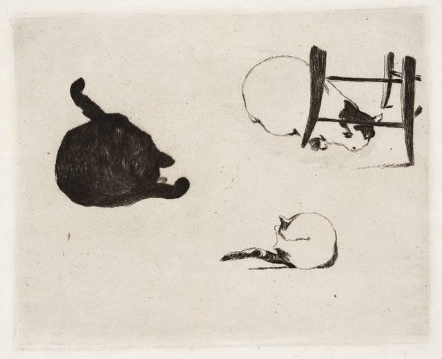 An image of The cats