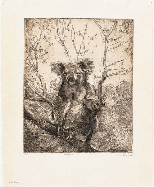 An image of Koala I by Sydney Long