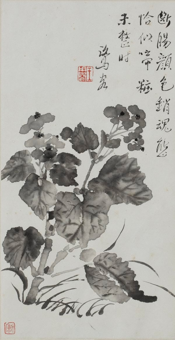 An image of Begonia